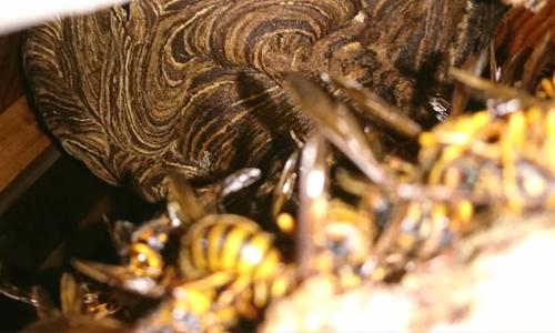 蜂・蜂の巣駆除